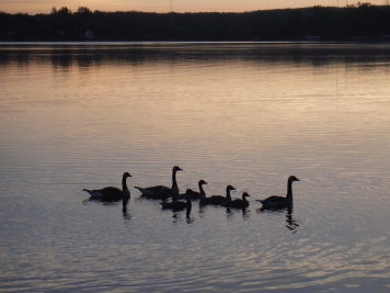 SunriseGeese